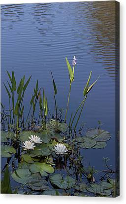 Yawkey Wildlife Reguge Water Lilies With Rare Plant Canvas Print by Suzanne Gaff