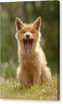 Yawning Fox Kit Canvas Print by Roeselien Raimond