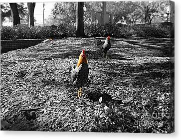 Canvas Print featuring the photograph Ybor Cocks by Blake Yeager