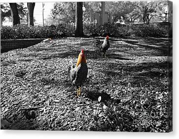 Ybor Cocks Canvas Print