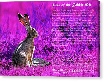 Year Of The Rabbit 2011 . Magenta Canvas Print by Wingsdomain Art and Photography