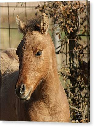 Yearling Canvas Print by Rick Friedle