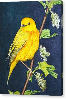 Yelllow Warbler Canvas Print by Sharon Farber