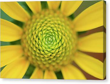 Yellow Canvas Print