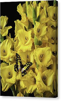 Yellow And Black Butterfly On Yellow Glads Canvas Print by Garry Gay