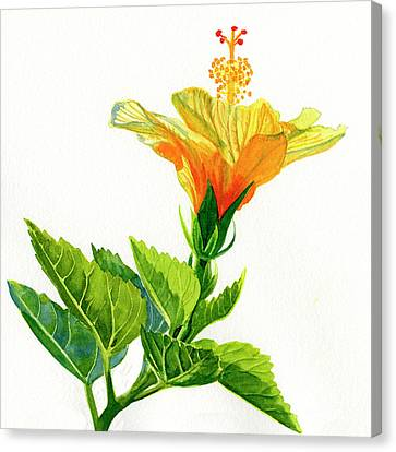 Yellow And Gold Hibiscus With Leaves ,quare Canvas Print