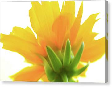 Canvas Print featuring the photograph Yellow And Green by Roger Mullenhour