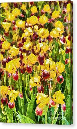 Yellow And Maroon Irises - Painted Canvas Print by Gene Healy