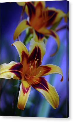 Yellow And Orange And Garnet Daylilies 1270 H_2 Canvas Print