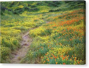 Canvas Print featuring the photograph Yellow And Orange Wildflowers Along Trail Near Diamond Lake by Jetson Nguyen