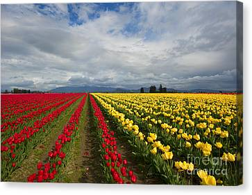 Yellow And Red Canvas Print by Mike Dawson