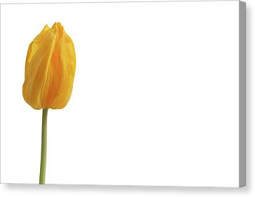 Canvas Print featuring the photograph Yellow And Tulip by Marie Leslie