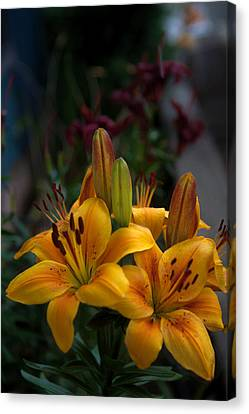 Yellow Beauties Canvas Print by Cherie Duran