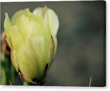 Canvas Print featuring the photograph Yellow Beauty by Amee Cave