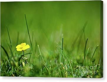 Canvas Print featuring the photograph Yellow Beauty by Kennerth and Birgitta Kullman