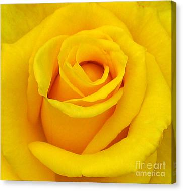 Yellow Beauty Canvas Print by Mg Blackstock