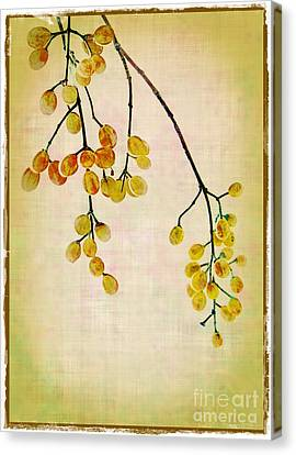 Yellow Berries Canvas Print