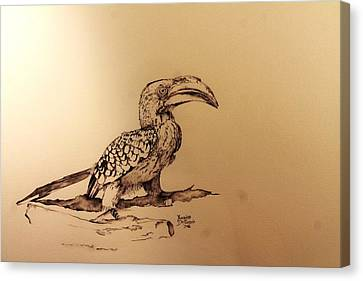 Yellow Billed Hornbill Canvas Print by Yuanitha Du Plessis