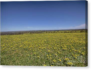 Canvas Print featuring the photograph Yellow Blanket II by Douglas Barnard