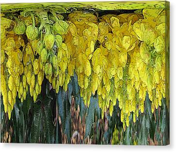 Yellow Buds Canvas Print by Tim Allen