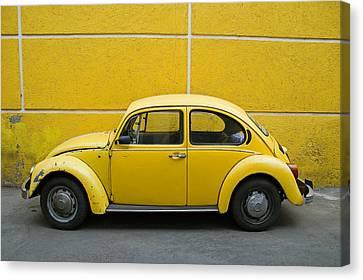 Yellow Bug Canvas Print by Skip Hunt