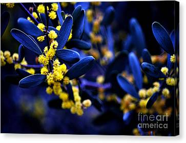 Yellow Bursts In Blue Field Canvas Print by Clayton Bruster
