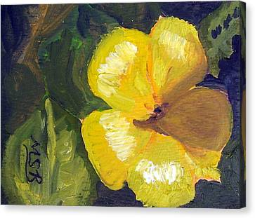 Yellow Buttercup  Canvas Print by Maria Soto Robbins