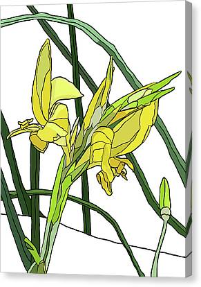 Yellow Canna Lilies Canvas Print by Jamie Downs