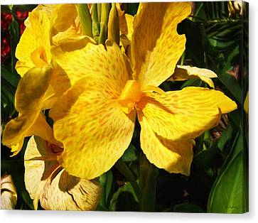 Yellow Canna Lily Canvas Print by Shawna Rowe