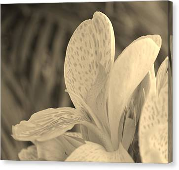 Yellow Canna Canvas Print by Melanie Moraga