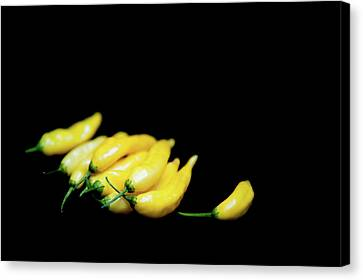Yellow Chillies On A Black Background Canvas Print