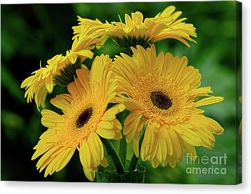 Canvas Print featuring the photograph Yellow Chrysanthemums By Kaye Menner by Kaye Menner