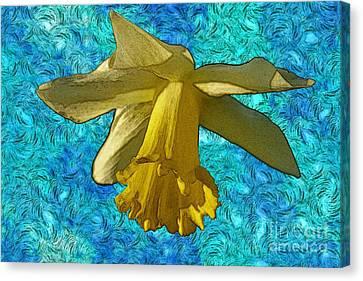 Yellow Daffodil 3 Canvas Print by Jean Bernard Roussilhe