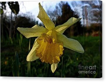 Yellow Daffodils 5 Canvas Print by Jean Bernard Roussilhe