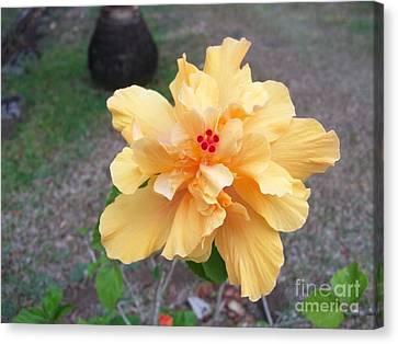 Yellow Double Hibiscus Canvas Print