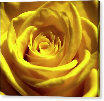 Yellow Dream 2 Canvas Print