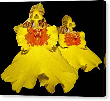 Canvas Print featuring the photograph Yellow Dresses by Judy Vincent