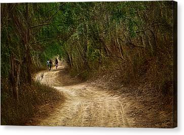Yellow Dust Road Canvas Print by Cameron Wood