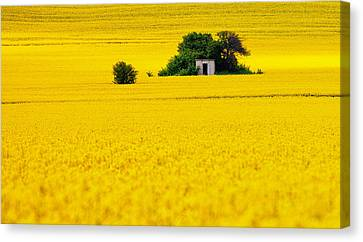 Yellow Canvas Print by Evgeni Dinev