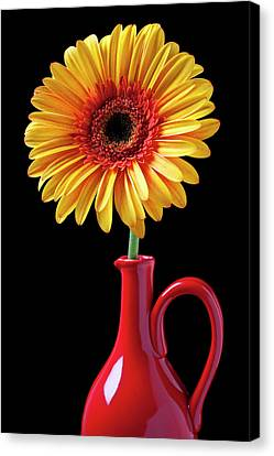 Yellow Fancy Daisy In Red Vase Canvas Print