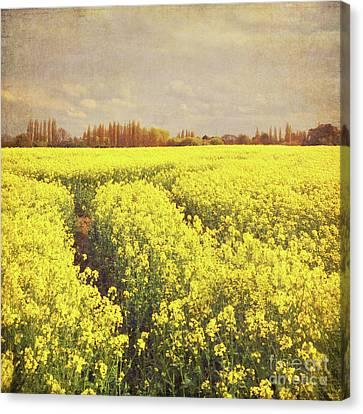 Yellow Field Canvas Print by Lyn Randle
