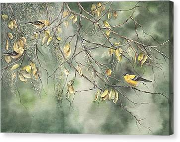 Yellow Finch Canvas Print