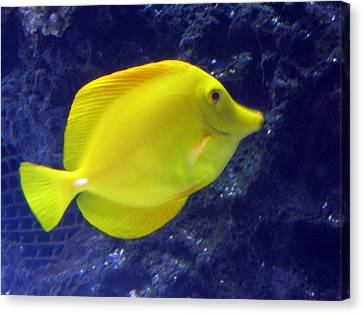 Canvas Print featuring the relief Yellow Fish by Suhas Tavkar