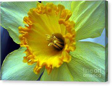 Clayton Canvas Print - Yellow Floral by Clayton Bruster