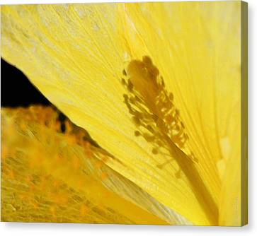 Yellow Flower - Hibiscus Shadow - Sharon Cummings Canvas Print by Sharon Cummings