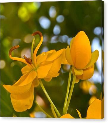 Yellow Flower Canvas Print by Lori Kesten