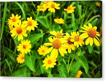 Yellow Flowers No. 2 Canvas Print
