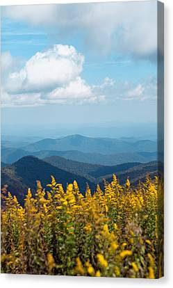 Yellow Flowers Along The Blue Ridge Mountains Canvas Print by Kim Fearheiley