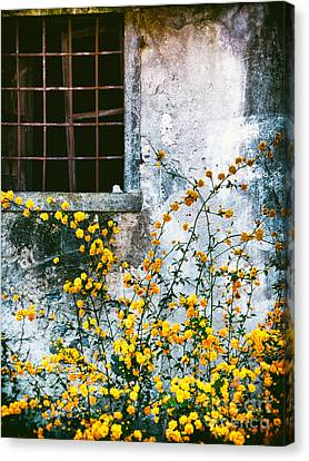 Canvas Print featuring the photograph Yellow Flowers And Window by Silvia Ganora