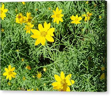 Canvas Print featuring the photograph Yellow Flowers by Beth Akerman